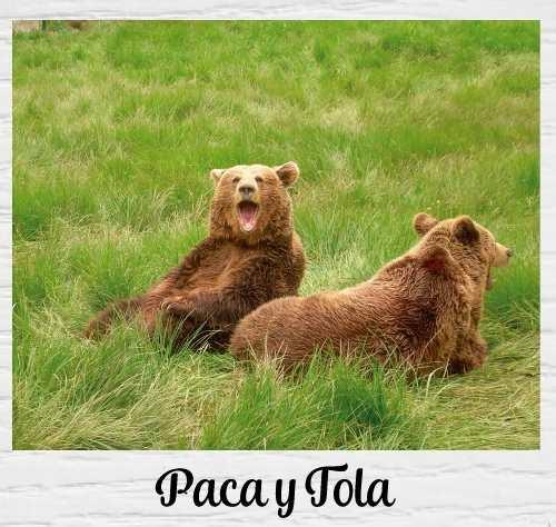 La Senda del oso